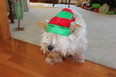 De originele foto - Puck als een kerst Elf